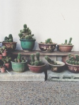 garden potted plants cactus